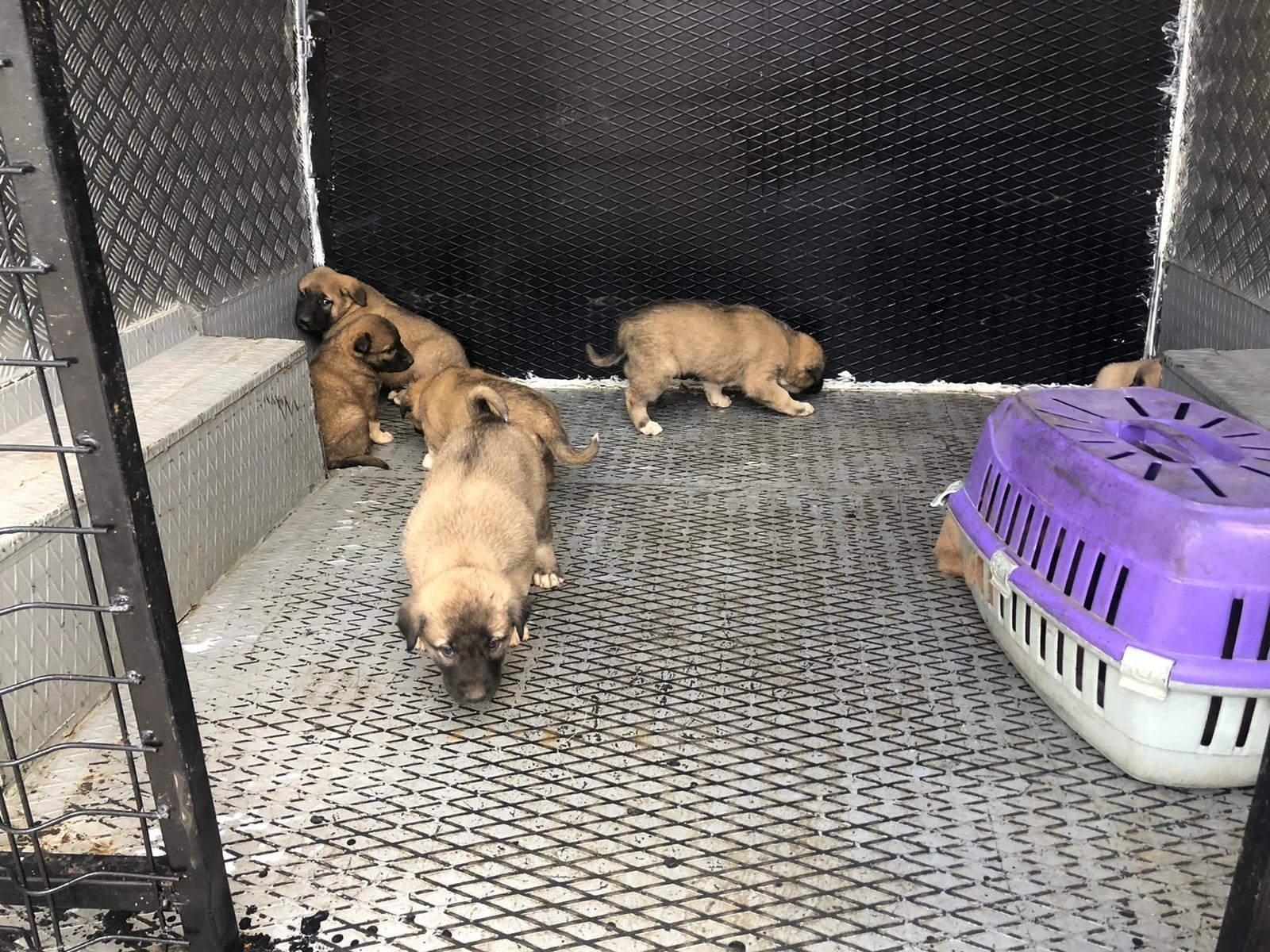 11 Yavru Köpek Koruma Altına Alındı