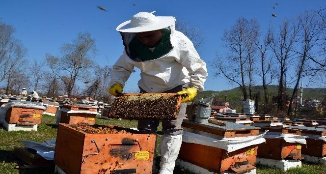 Arıcılara Hibe Desteği Başladı