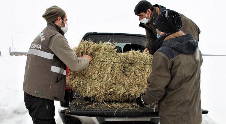 Yaban Keçilerine 3,5 Ton Yem Bıraktılar