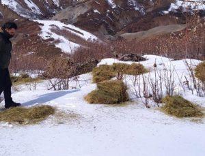 Bingöl'de Doğaya 800 Kilo Yem Bırakıldı