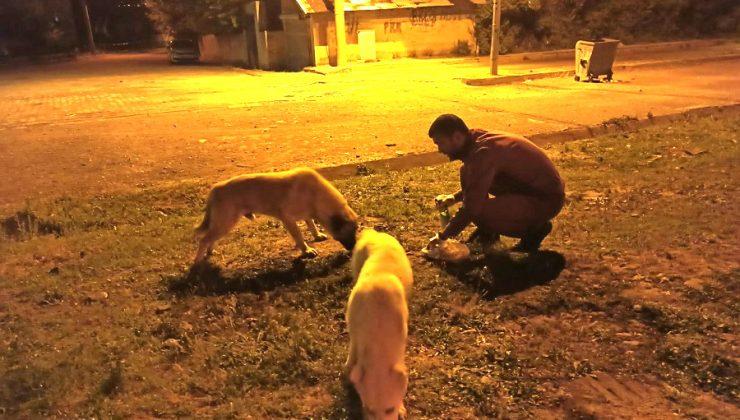 'Saldırgan Sokak Hayvanları Barınaklara Yerleştirilsin'