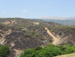 Yangın Yüzde 70 Kontrol Altında