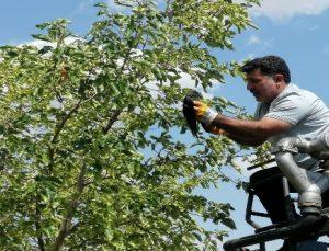 Ağaca Takılı Kalan Kuşu İtfaiye Kurtardı
