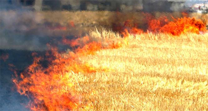 Anız Yangını Doğaya Zarar Veriyor