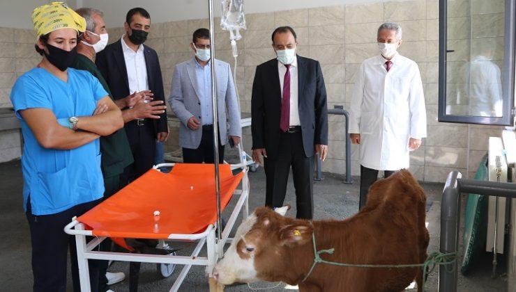 Üniversite Hayvan Hastanesi Hizmet Vermeye Başladı